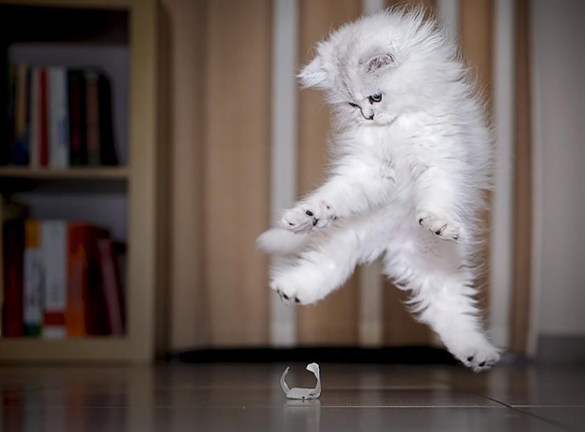 fotos de gatos ninjas