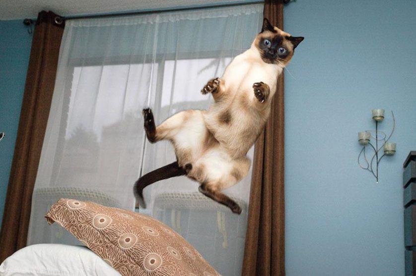 fotos de gatos pulando