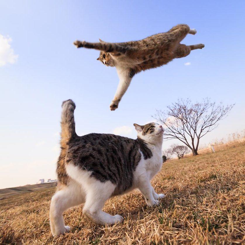 gatos pulando como ninjas 7