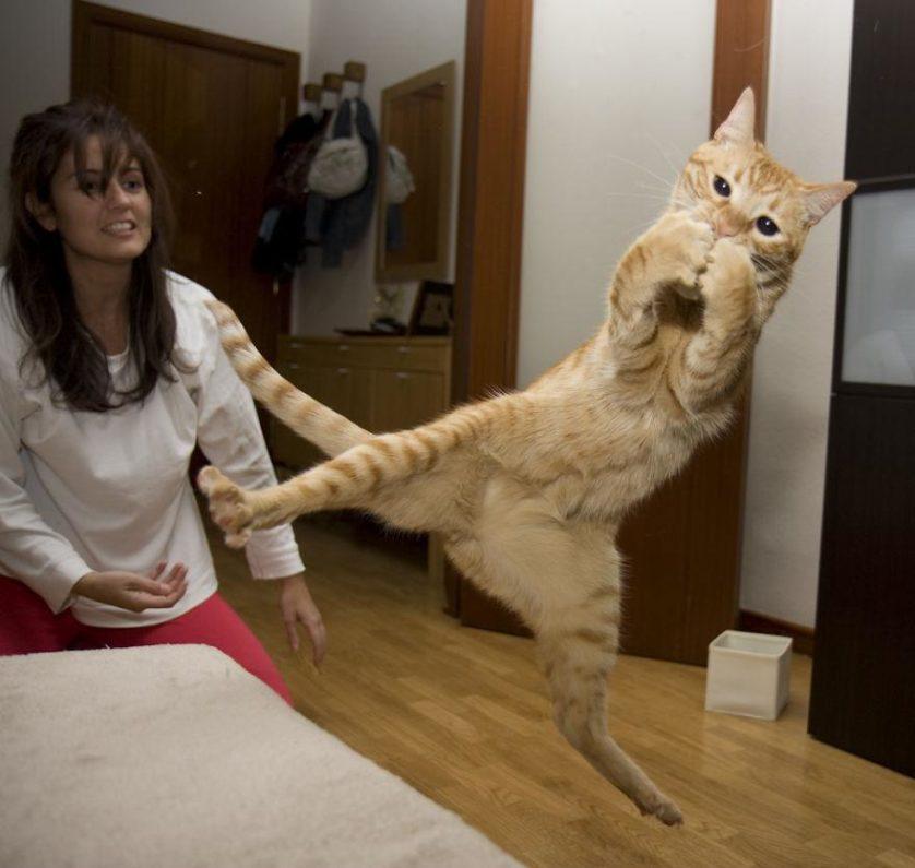 gatos pulando como ninjas 8