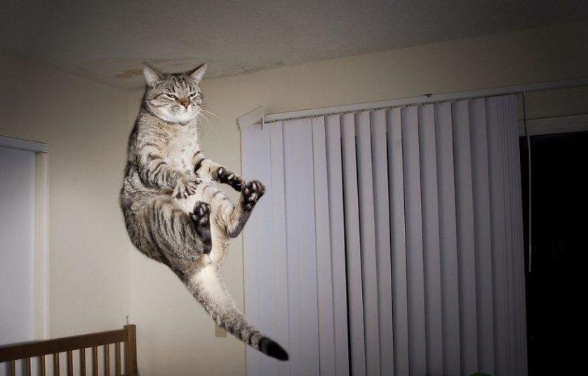 gatos pulando como ninjas 9
