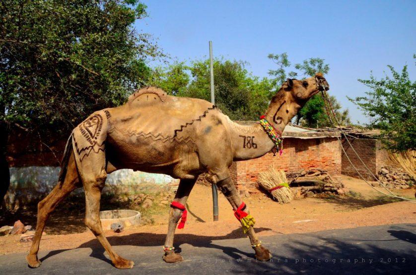 obras de arte controversas que utilizam animais 10-