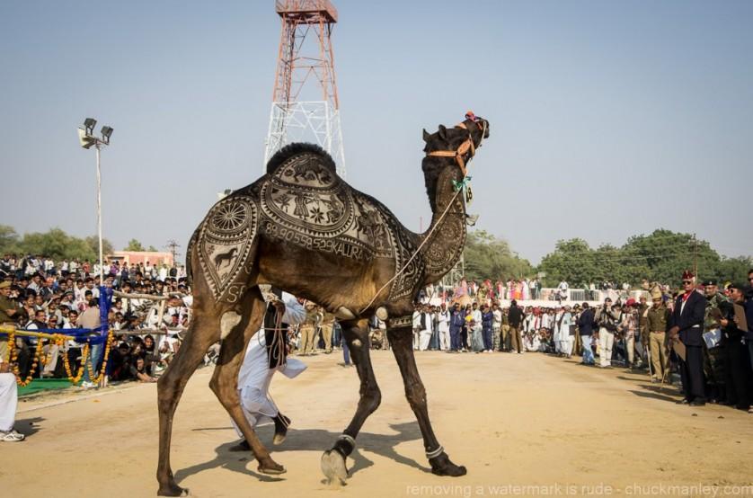 obras de arte controversas que utilizam animais 10