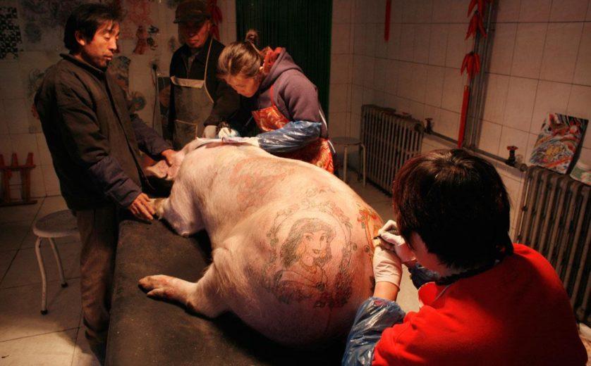 obras de arte controversas que utilizam animais 4-
