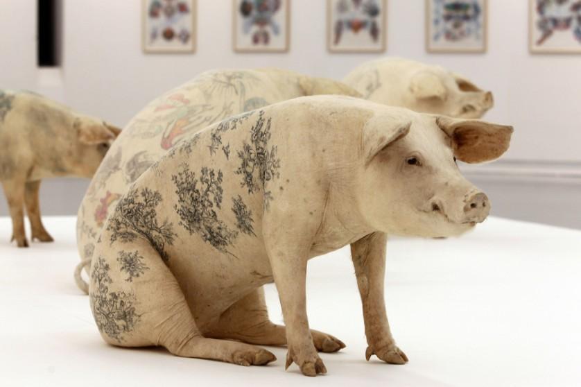 obras de arte controversas que utilizam animais 4