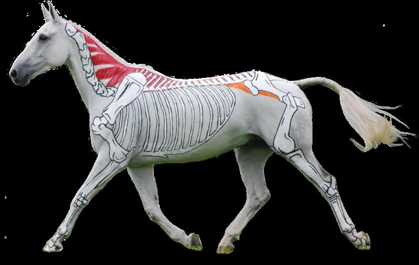 obras de arte controversas que utilizam animais 9-