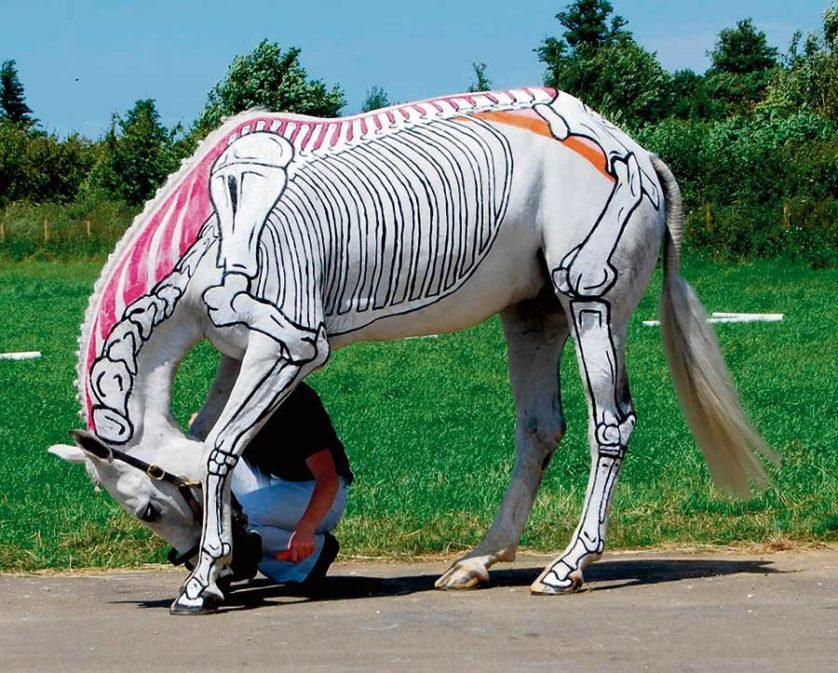 obras de arte controversas que utilizam animais 9--