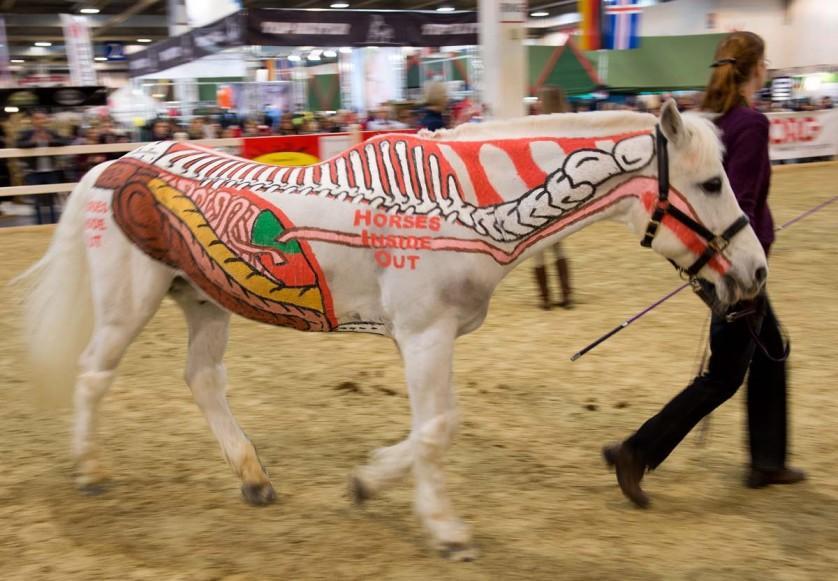 CORRECTION-GERMANY-ANIMALS-HORSE-OFFBEAT