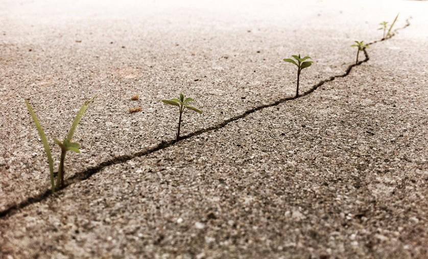 plantas prosperando condicoes ruins (1)
