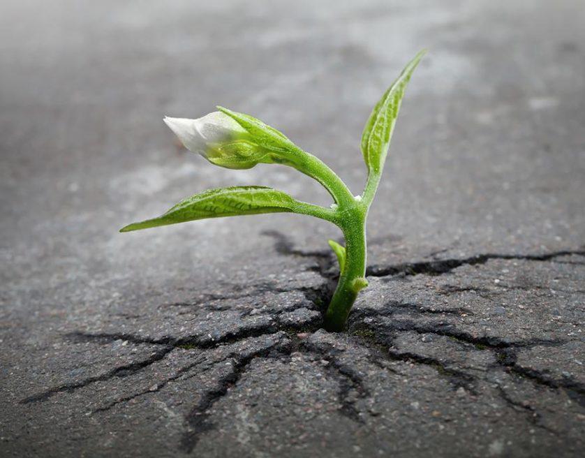 plantas prosperando condicoes ruins (14)