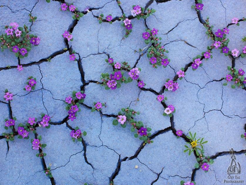 plantas prosperando condicoes ruins (15)
