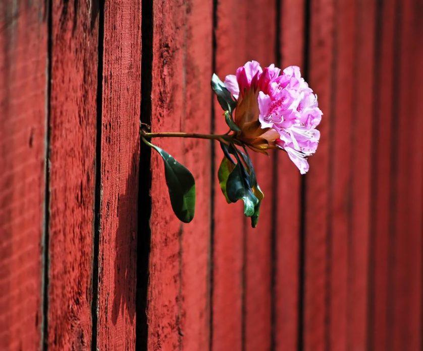 plantas prosperando condicoes ruins (16)