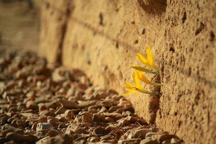 plantas prosperando condicoes ruins (18)