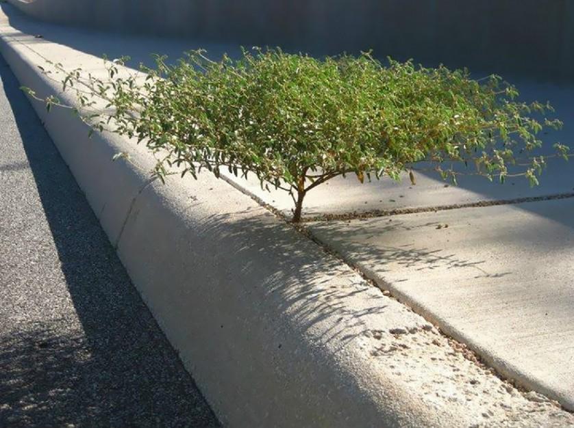 plantas prosperando condicoes ruins (22)