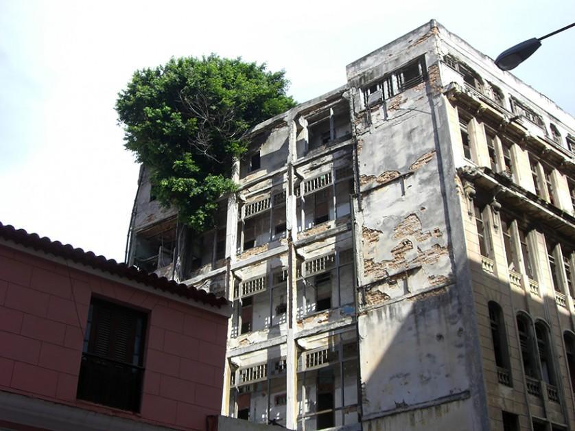 plantas prosperando condicoes ruins (25)