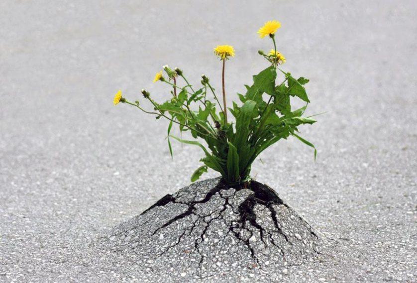 plantas prosperando condicoes ruins (6)