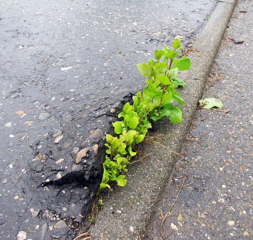 plantas prosperando condicoes ruins (7)