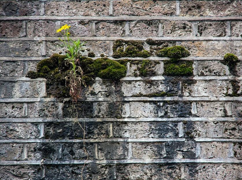 plantas prosperando condicoes ruins (8)
