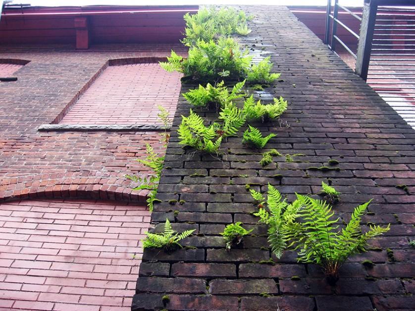 plantas prosperando condicoes ruins (9)