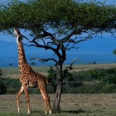 10 tentativas de explicar a vida sem a evolução darwiniana