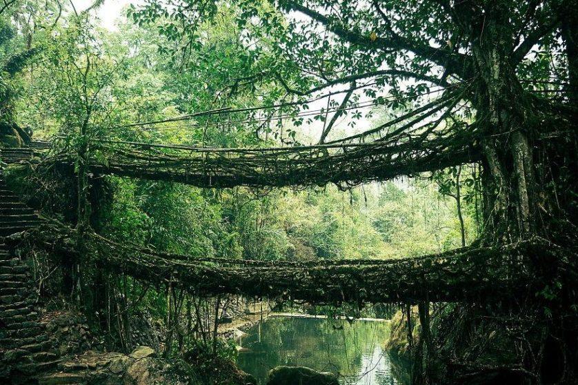 Ponte Root, na Índia