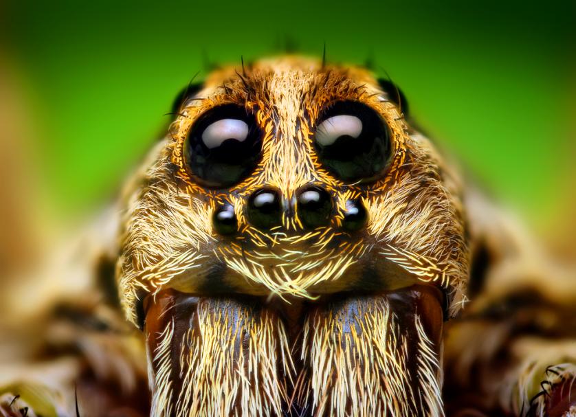 aranhas 3