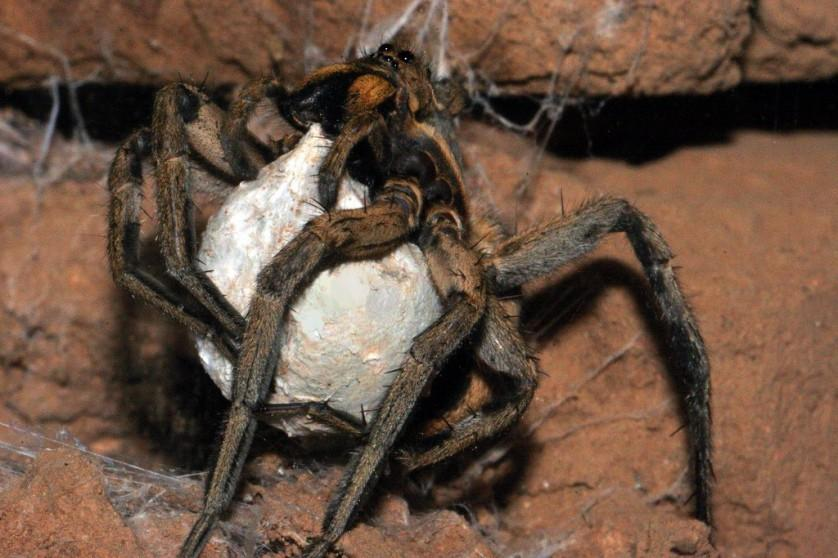 aranhas 4