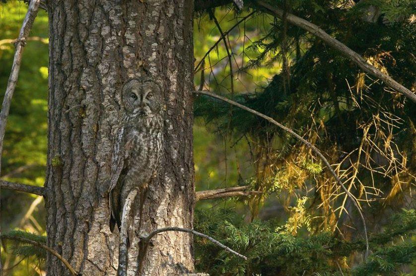 coruja na árvore