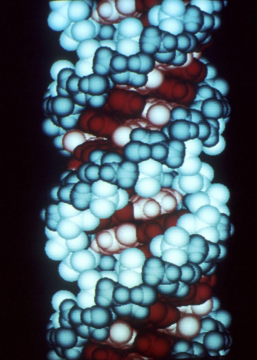 enzima