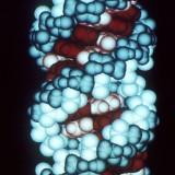 """Vida artificial: cientista cria enzima """"viva"""" que se reproduz e evolui"""