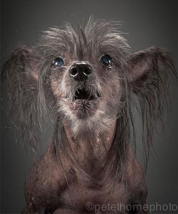 fotos de cachorros 07