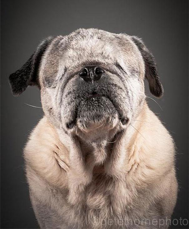 fotos de cachorros idosos 09