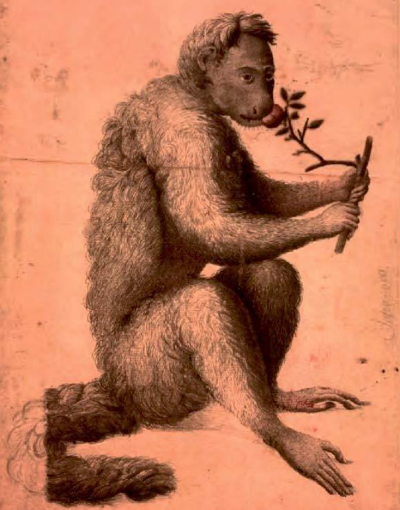 macacos saguis 1-