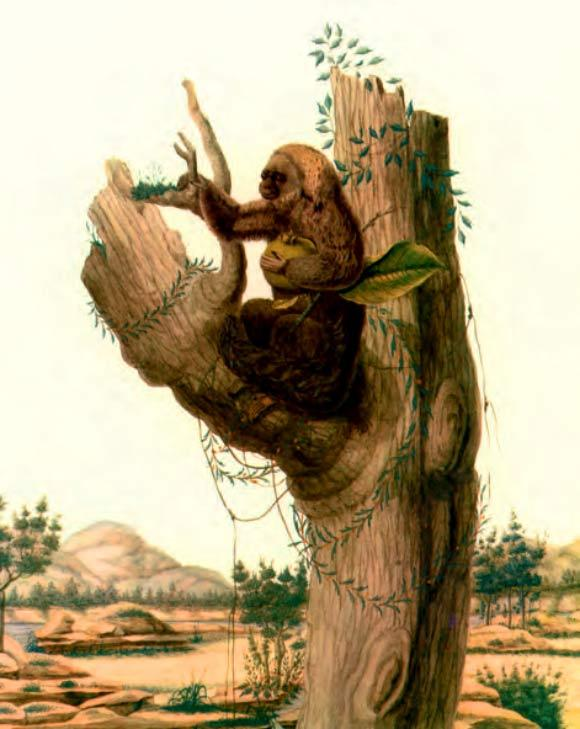 macacos saguis 2-