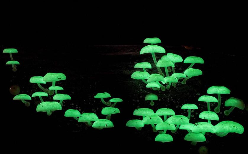 mushroom photo foto