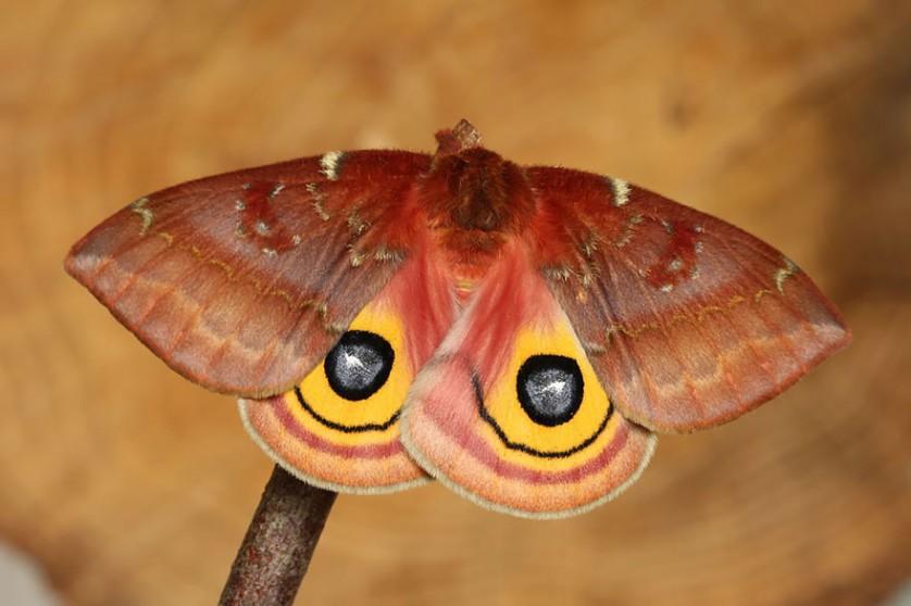transformacao borboletas 18-
