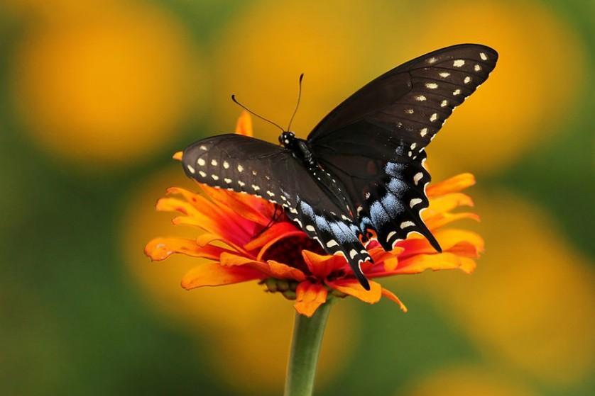 transformacao borboletas 3-