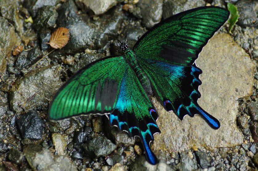 transformacao borboletas 4-