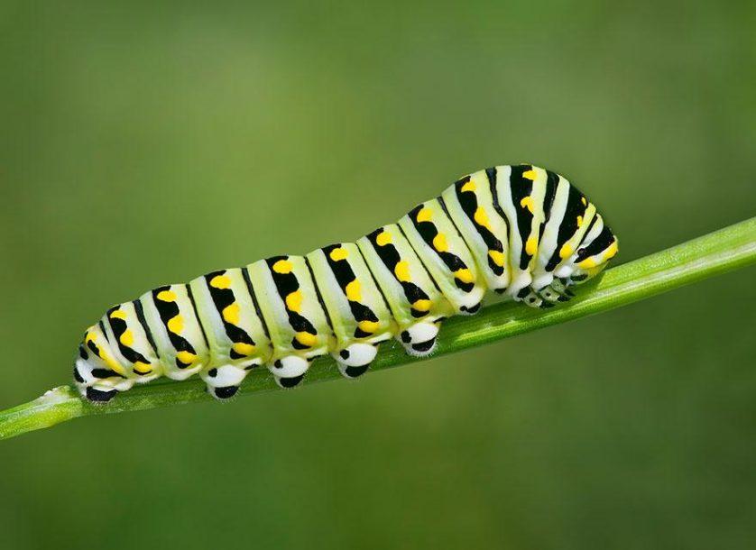 transformacao borboletas 4