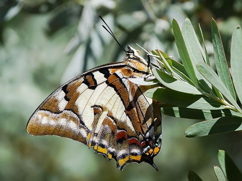 transformacao borboletas 5-