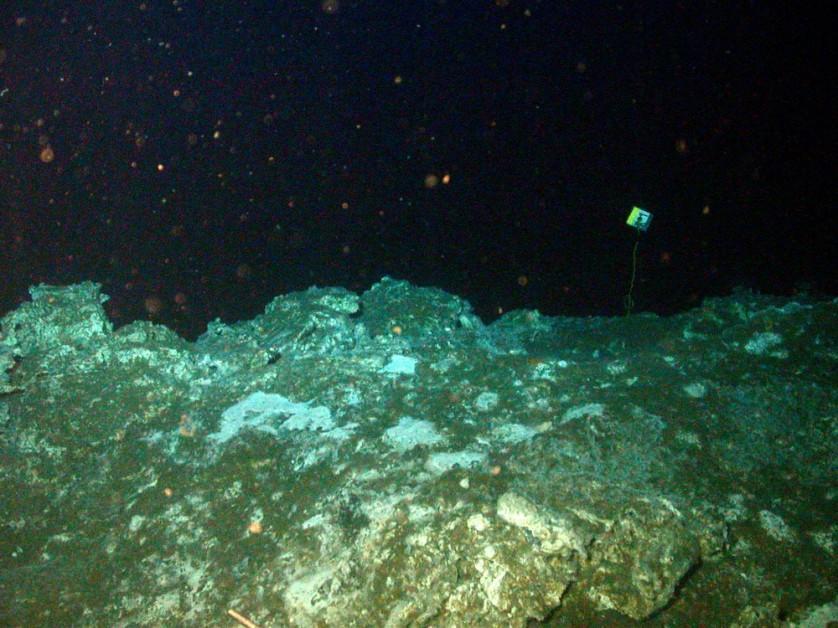 vida rochas fundo oceado 2