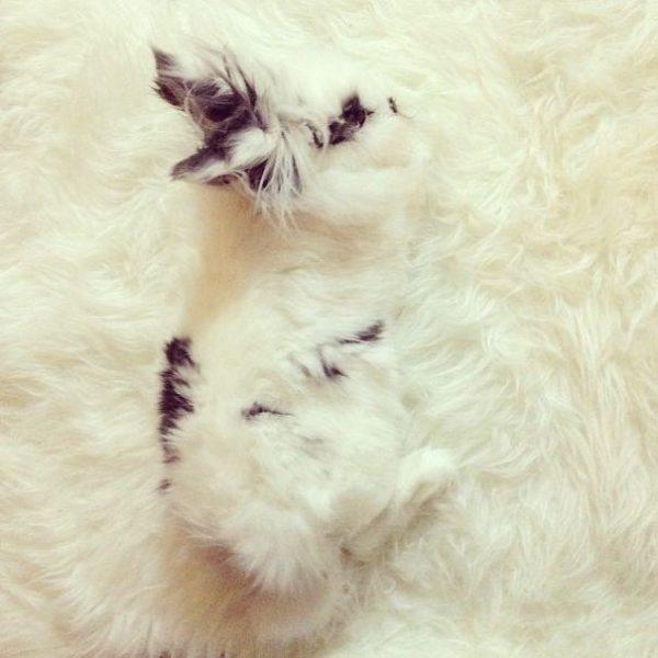 animais camuflagem (1)