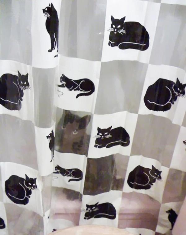 animais camuflagem (11)