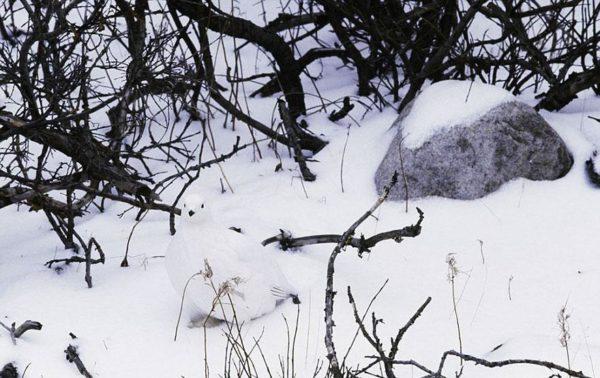 animais camuflagem (14)