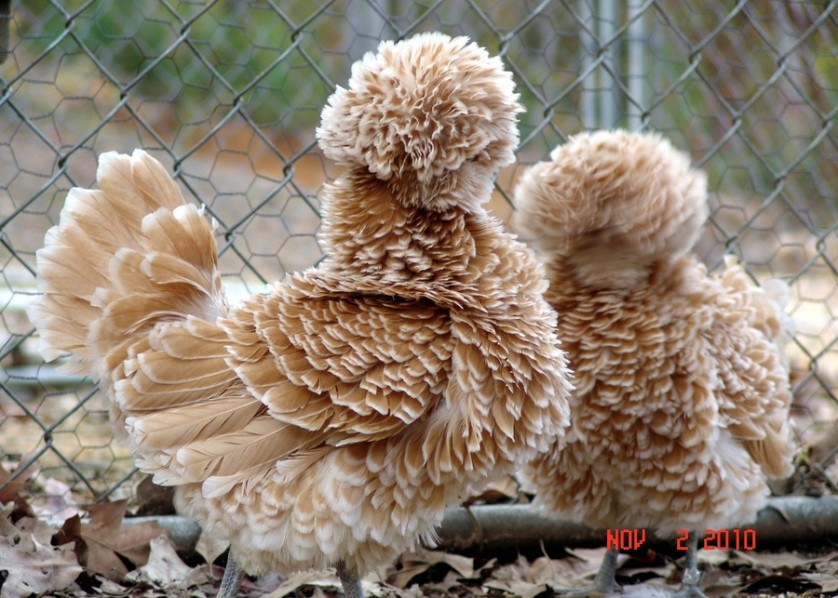 animais fofos 10-