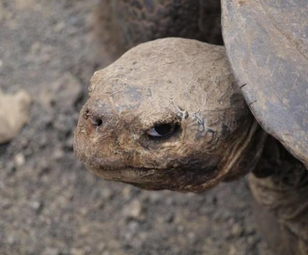 """""""Não tem medo de tartaruga? NÃO MESMO?"""""""