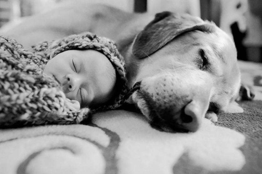 bebes e cachorros (10)