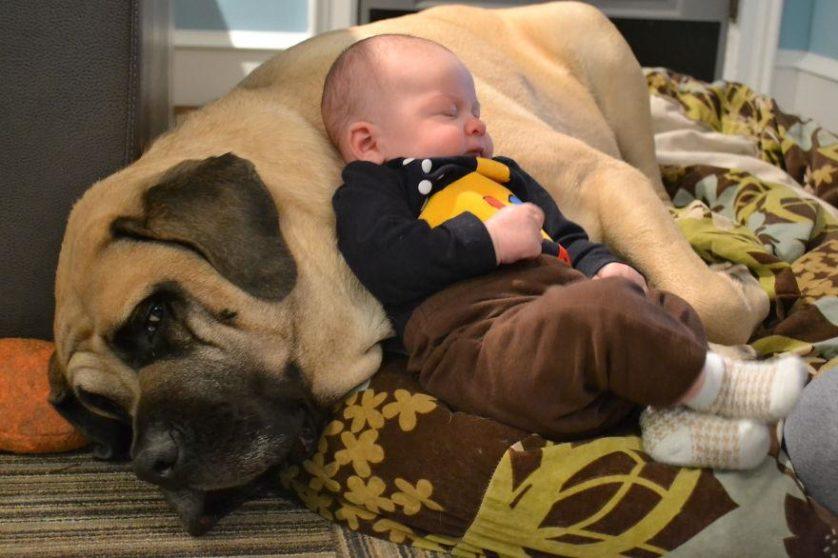bebes e cachorros (16)