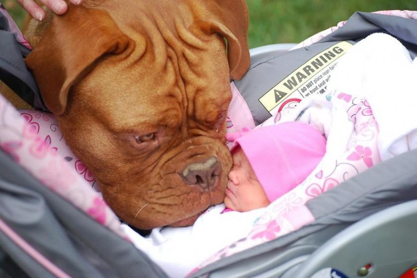 bebes e cachorros (18)