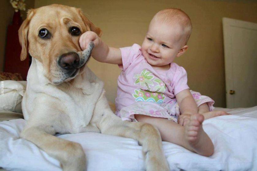 bebes e cachorros (19)